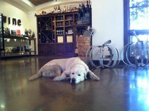 Harney Lane's Winery Dog