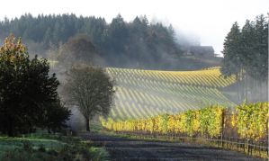 WintersHillVineyard-610x365